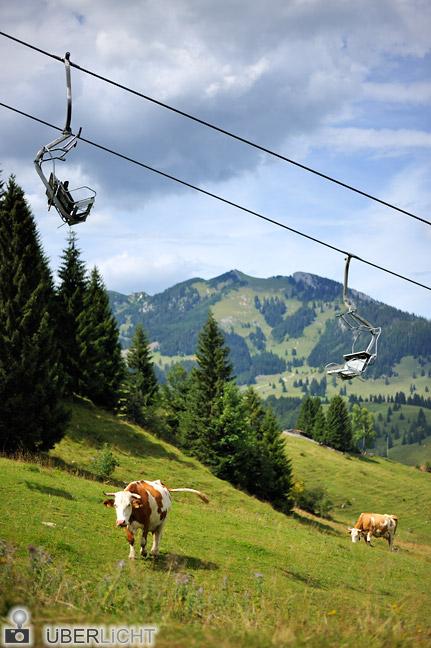 Nikon AF-S Nikkor 50 1,8G Kuehe Skilift Weide Alm Alpen Bayern