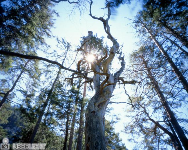 Harman Titan Lochkamera Camera Obscura Pinhole 4x5 Grossformat Baum Sonne