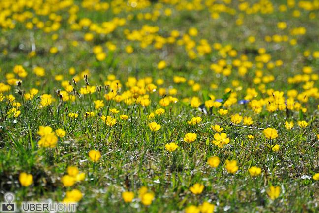 Nikon 1 NIKKOR VR 30-110 mm Blumenwiese im Frühling Alpen