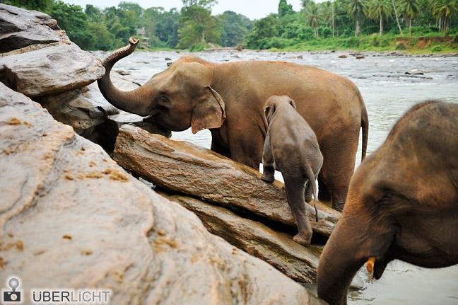 Nikon 24-70 mm Nikkor 2,8G AF-S Elefanten in Pinnawela Sri Lanka