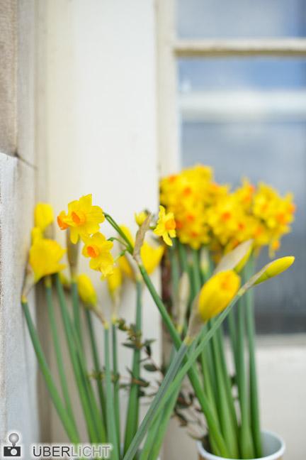 Narzissen Unschaerfe Blumen gelb Test Walimex pro 35/1,5 VDSLR Vollformat